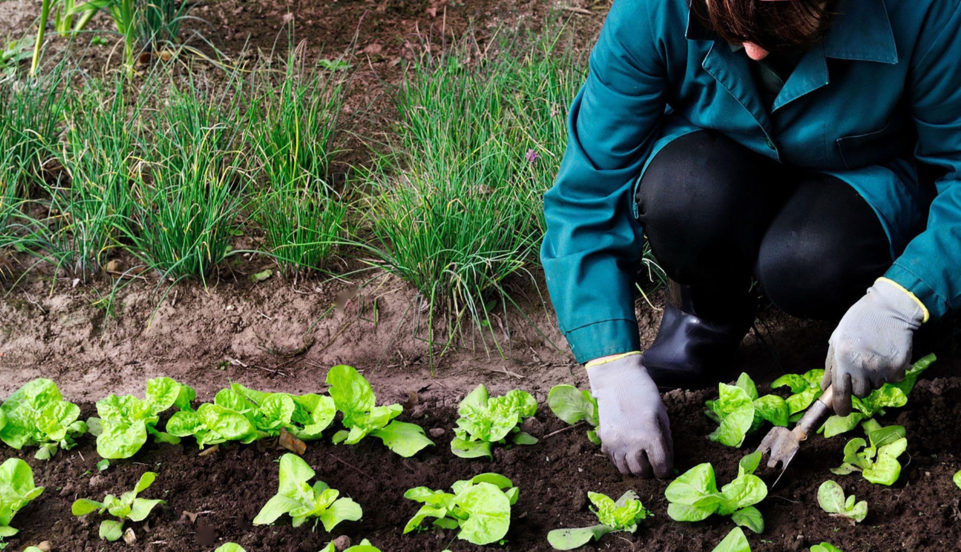 Requisitos para la agricultura ecologica
